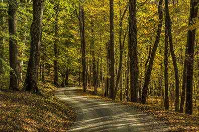 Path Through the Fall Woods - Hocking Hills of Ohio - Hocking Hills Photography