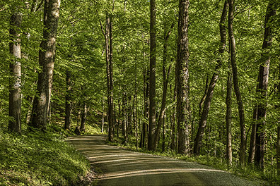 Path Through the Spring Woods - Hocking Hills of Ohio - Hocking Hills Photography